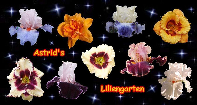 Astrid´s Liliengarten
