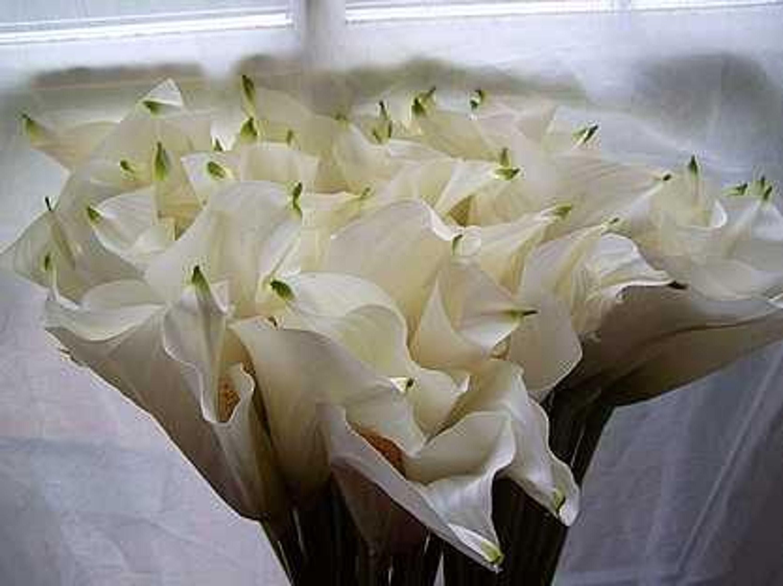 2 calla wei blume blumen kunstblume floristik kaufen bei. Black Bedroom Furniture Sets. Home Design Ideas