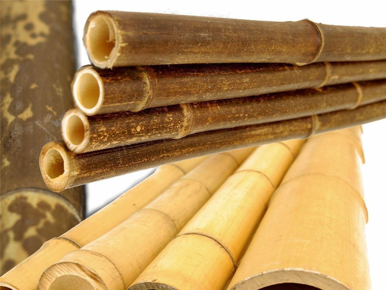 bambusrohr riesenauswahl tigerbambus schwarzer bambus. Black Bedroom Furniture Sets. Home Design Ideas