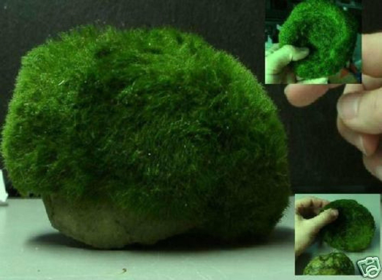 Teich Kaufen halbkugel pflanzmatte mit wassergras 12 cm wasserpflanzen für das