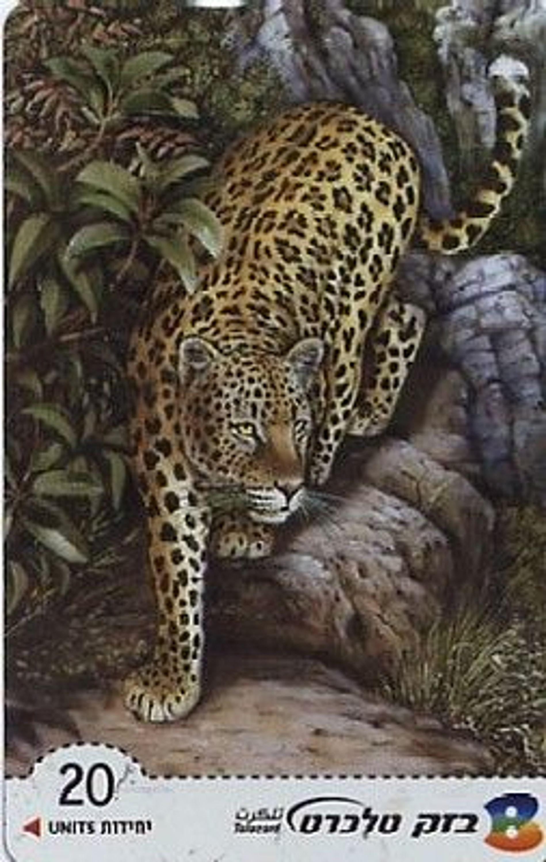 israel tk leopard gebraucht kaufen bei. Black Bedroom Furniture Sets. Home Design Ideas