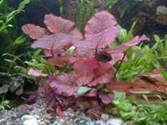 Zum Shop: Aquaristik- und Pflanzenfachmarkt