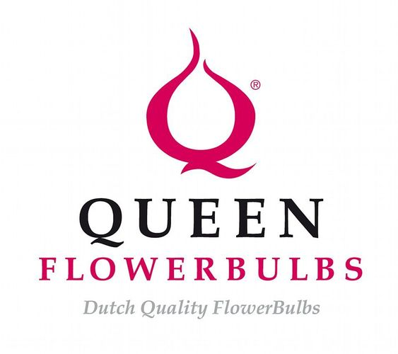 Queen Flowerbulbs