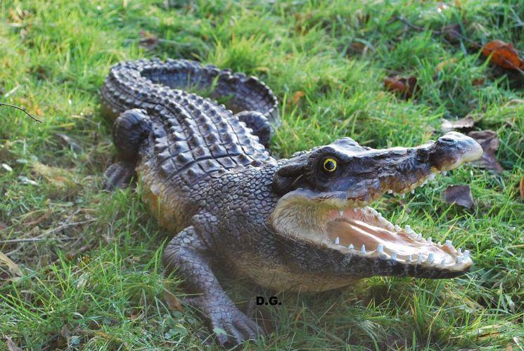 Krokodil Echse