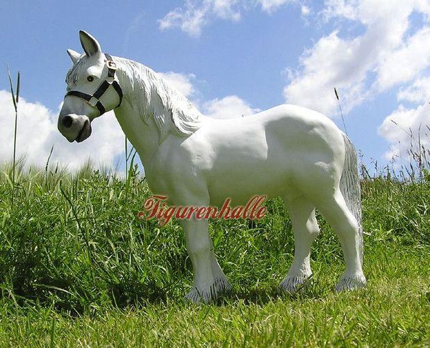 Schimmel pferd kaufen