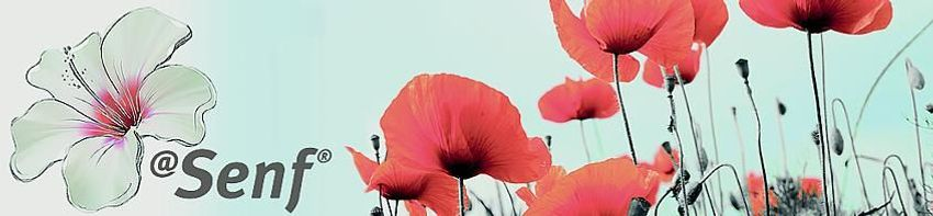 Blumen-Senf