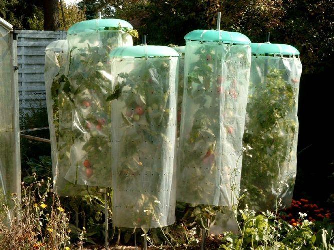 Tomatenhut Basis-Set 3 Hüte 3 Schläuche Tomatenschutz