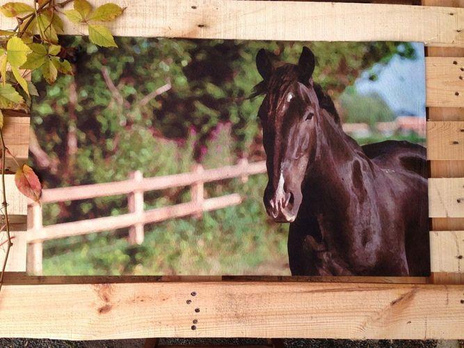Haustür-Matte mit Pferd Matte schmutzaufnehmende Türmatte mit Bild Fußmatte